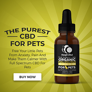 Best cbd oil dog cat pets
